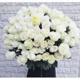Роза белая 70-80 см