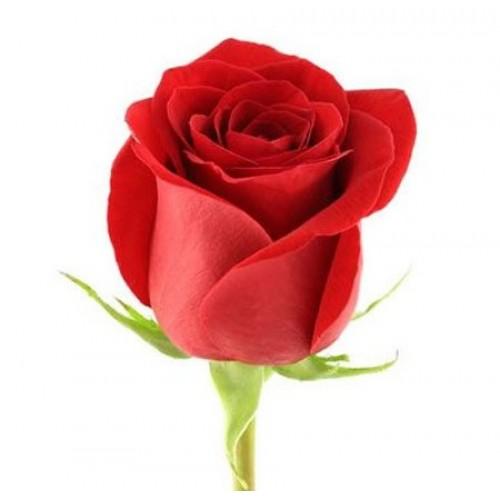 Красные розы поштучно - фото