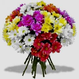 Хризантема - букет 11 штук